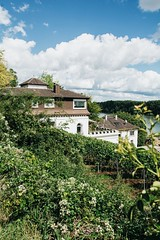 haus am rhein 🍇🌿🌊 (lina zelonka) Tags: oppenheim germany europe linazelonka vertical summer sommer green house haus rlp rhinelandpalatinate rheinlandpfalz rheinhessen rhoihesse vineyards weinberge viticulture sunny deutschland nikond7100 18105mm