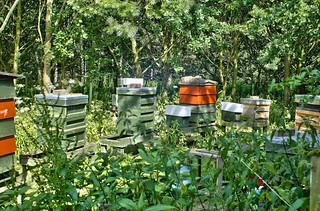 Honey Bee Hives, Yorkshire, UK, 01072018, EOS 1Ds, Jcw1967 (1)