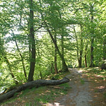 Path trough woodland in spring colours thumbnail