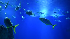Den Blå Planet (jpellgen (@1179_jp)) Tags: denblåplanet aquarium denmark dane danish travel nikon sigma 1770mm 2018 summer august d7200 scandinavia scandinavian europe european aqaurium fish animals kastrup copenhagen kobenhavn 3xnas architecture øresund
