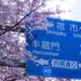Chiyoda Sakura - Tokyo, Japan