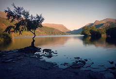 Llyn Padarn - Snowdonia (plot19) Tags: wales llyn padarn snowdonia landscape light love mountains hills sunset uk britain plot19 photography west water lake tree lonesome lone