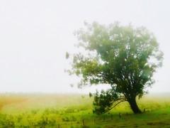 It Rained (Robert Cowlishaw (Mertonian)) Tags: asoftrain atree hawaii mysty misty mertonian robertcowlishaw simplicity quiet peaceful ineffable awe wonder canonpowershotg7xmarkii canon powershot g7x mark ii photophari forwisdom