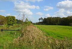 LANDSCAPE (JaapCom) Tags: jaapcom wezep landscape landschaft clouds green dutchnetherlands natural natuur nature holland