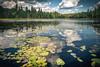 Algonquin park III (Ingeborg Ruyken) Tags: instagram woods bomen meer trees forest 500pxs bos canada natuurfotografie lake algonquin flickr zomervakantie