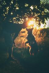 Cherish (flashfix) Tags: september132018 2018inphotos ottawa flashfix flashfixphotography ontario canada nikond7100 55mm300mm nature mothernature car vehicle portrait adventure mandog sock dog canine animal pet austrailanshepherd triaustrailanshepherd bluemerle tricolour heterochromia outside lifestyle family sunlight dusk sunset golden
