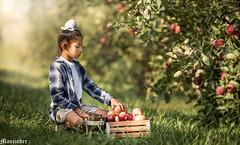 Bounteous Minnesota!!!! (mpapial) Tags: apples sikh boy minnesota autum fall apple orchard