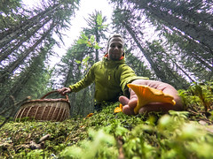 picking mushrooms in a forest (VisitLakeland) Tags: finland lakeland autumn chaterelle forest kanttarelli luonto man metsä mushroom nature outdoor pick poimi sieni syksy