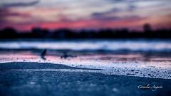 Naturereignis.. (cornelia_auguste) Tags: abendstimmung abendstunde abendlicht abenddämmerung abendhimmel corneliaauguste düsseldorf deutschland dämmerung detailaufnahme einzigartigkeit emotion farbenspiel farben fluss germany gegenlicht himmel himmelsstimmung himmelsfarben hochwasser lichtstimmung light landschaft moment nrw nature outdoor pink rheinufer rhein sonnenuntergang spiegelung skyline sky ufer überschwemmung wasser wolkenstimmung water wolkenbildung