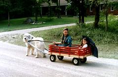 SF98 Dog Wagon 2 (rumimume) Tags: potd rumimume 2017 niagara ontario canada photo canon 80d sigmarumimume owensound still summerfolk festival friends fun folk music kelso beach summer concert outdoor 1998