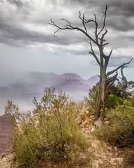 Storm at Mather (Kirk Lougheed) Tags: arizona coloradoplateau grandcanyon grandcanyonnationalpark matherpoint southrim usa unitedstates landscape nationalpark outdoor park rim summer