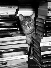 Happy Caturday! (Monica Muzzioli) Tags: cat caturday book books bw blackandwhite bn biancoenero gatto pet animal