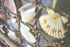 Shells once again. (Denis Kuschter) Tags: rope hanging decor shells dof depthoffield bokeh