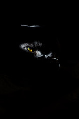 The EYE (multifaceted_m) Tags: cat dark lowkey scary