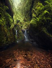 Scottish greens (Ron Jansen - EyeSeeLight Photography) Tags: scotland greens moss ferns canyon deep fairytale water flow light stones rocks green