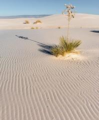 Traces (garshna) Tags: yucca sand tracks dunes whitesandsnationalmonument ripples sky nikon newmexico