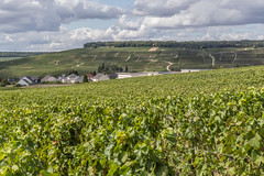 Vines (ClydeHouse) Tags: champagne vineyard 51 grandest reuil byandrew vignoble marne france