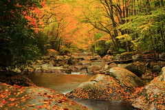 Big Creek Color (MarcusDC) Tags: greatsmokymountainsnationalpark autumn leaves fallfoliage