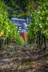 Vines (pbr42) Tags: germany saxony sachsen radebeul hdr outdoor farm vineyard vines building dome architecture soil path wood