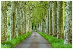 Allée verte (Pascale_seg) Tags: landscape paysage tree lignes vertical verdure nature earth green route chemin printemps moselle lorraine grandest france nikon