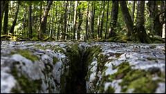 _SG_2018_08_6009_IMG_9462 (_SG_) Tags: switzerland schweiz swiss magglingen wanderung hike hiking twannbach ravine twannbachschlucht twann lake biel bieler see rock walls stein felsformationen water fluss geology river canyon fairytale lanes chasserals cure path