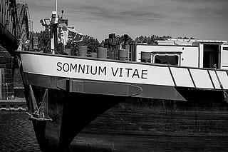 SOMNIUM VITAE (Detail)
