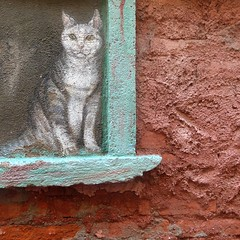 catty-corner (msdonnalee) Tags: cat gato walltexture kotka katze chat 猫 gatto кошка