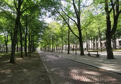 The Hague, Lange Voorhout (Elisa1880) Tags: the hague lange voorhout bomen trees