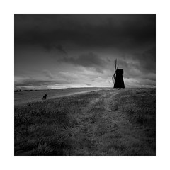 BLACK DOG (Nick green2012) Tags: dog square landscape blackandwhite infrared silence windmill
