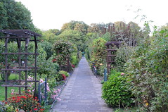 Der Garten am 19. September 2018 (peterwoelwer) Tags: nikond300s kleingarten schrebergarten garten jardin garden