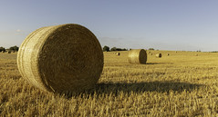 Bales of Gold (Hemzah Ahmed) Tags: hay bale bales haybales straw landscape landscapephotography eos canon5dmarkiii canon5dmark3 canon1635mmf4 gold golden round summer sommer color colors outdoor outdoors shadow shadows