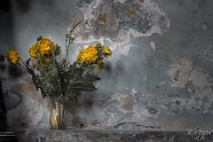 Lost flowers (thanks for > 1 M. views) Tags: stilllive stilleven flowers bloemen canon bmeijers bert meijers czechia