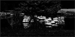 8 - Ecuisses (Bourgogne), La Villa Perrusson et son jardin - Sur la pièce d'eau, sculptures en céramique de Frédérique Fleury (melina1965) Tags: août august 2018 panasonic lumix dmctz57 bourgogne burgondy saôneetloire écuisses villaperrusson jardin jardins garden gardens noiretblanc blackandwhite bw sculpture sculptures eau water céramique ceramic arbre arbres tree trees