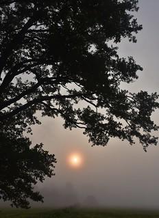 Am Morgen auf der Erlenwiese; Bergenhusen, Stapelholm (32)