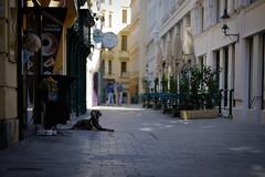 Watchdog (FlorianMilz) Tags: vienna downtown urban bakery pedestrian waiting lying watching dog wien austria at