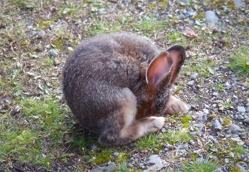 Baby bunny prayers