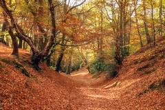 Autumn is just round the corner (photofitzp) Tags: autumn colours kenilworth seasons
