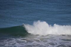 IMG_3623 (gervo1865_2 - LJ Gervasoni) Tags: surfing with whales lady bay warrnambool victoria 2017 ocean sea water waves coast coastal marine wildlife sealife blue photographerljgervasoni