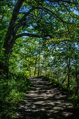 2018 - photo 258 of 365 - trail to Blue Beach, Nova Scotia (old_hippy1948) Tags: trail