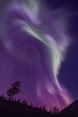 Aurora Borealis North Norway (ullsfjordibilder) Tags: auroraborealis nightphotography nordlys tree norway northernlights