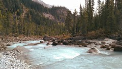 Autumn Yoho National Park Canada (Mr. Happy Face - Peace :)) Tags: autumn fall cans2s forest trees wilderness bc art2018 beautifulbritishcolumbia whitewater hiking glacier waters