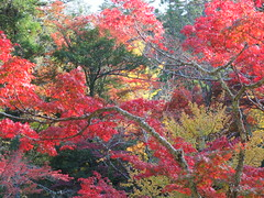 a (52) (hiromi89) Tags: japan beauty beautiful scenery flower wood pond