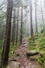 IMG_4559 (Alexander Malyshev) Tags: canon carpathians ukraine forest nature woods mounts