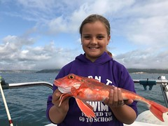 "Willow Herbert - Red Gurnard NCR • <a style=""font-size:0.8em;"" href=""http://www.flickr.com/photos/113772263@N05/30293960398/"" target=""_blank"">View on Flickr</a>"