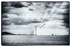 Birds on a Wire (nigdawphotography) Tags: telegraphpoles telegraphwire communication birds field farm arable essex allensgreen roost