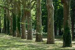 Light & Shade (M C Smith) Tags: pentax k3ii trees green shadows light grass path railings ivy post leaves branches