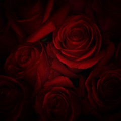 Anniversary #anniversary #flowers #roses #background #pattern #dark #snapseed #canonglobal #canon_eos_77d (N.A. Dikin) Tags: anniversary flowers roses background pattern dark snapseed canonglobal canoneos77d