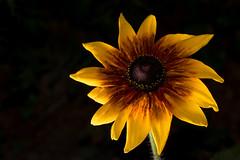 _PIO2937 (PiotrekSmyk) Tags: nikon d810 tamron 90mm f28 di macro 11 vc usd flower outdoor