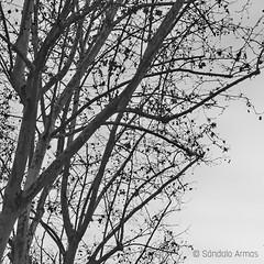 (Sándalo Armas) Tags: 2015 bw bn blackwhite blancoynegro blackandwhite noiretblanc biancoenero чернобелый 黑色和白色 pretoebranco schwarzundweis черноибяло blackandwhiteonly blackwhitepassionaward