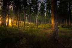 Hadas y sueños (AvideCai) Tags: avidecai arboles bosque atardecer paisaje canon1635